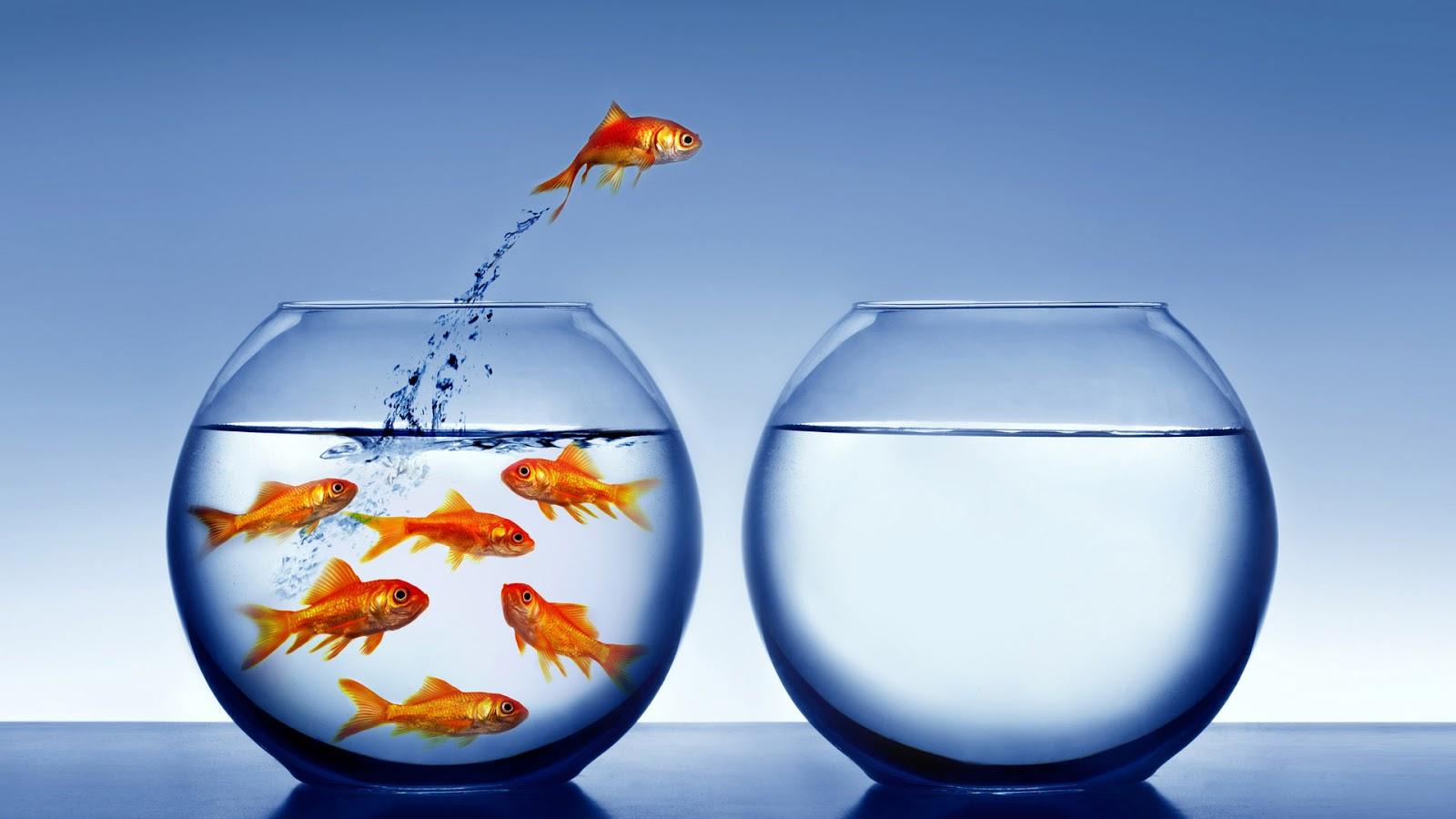 6 Buoni Motivi Per Iniziare Un'Attività Di Network Marketing