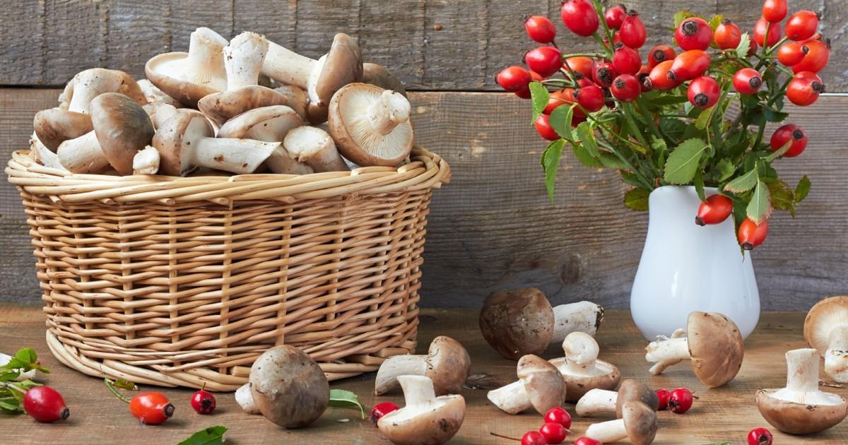 6 Proprietà Benefiche Dei Funghi