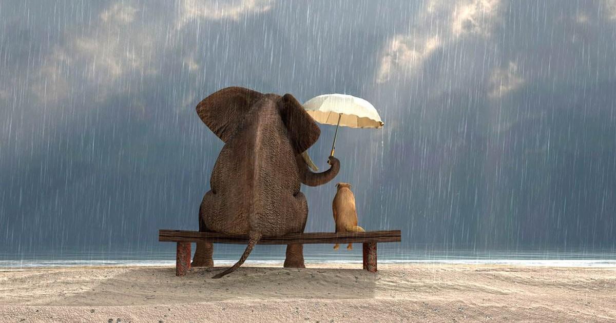 Non Sottovalutate Il Potere Della Gentilezza